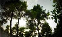 FILE0010_850.jpg
